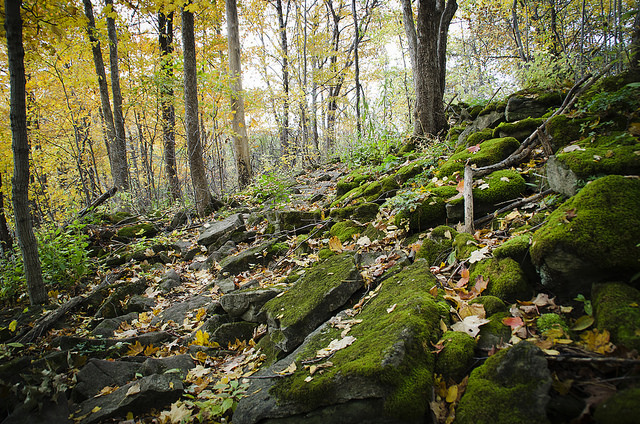 Fall Hiking at Hilton Falls