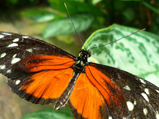 visiting the butterfly conservatory in niagara falls. Black Bedroom Furniture Sets. Home Design Ideas