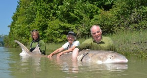 giant sturgeon in Fraser River