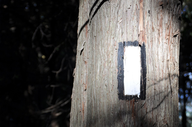 Hiking Ontario Tree Marker1 - Five Hiking Trails Near Toronto