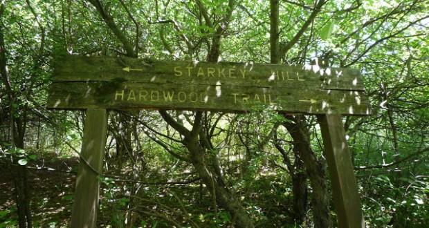 Hiking at Starkey Hill 620x330 - Hiking at Starkey Hill Trail in Summer