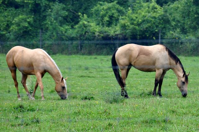 Reasons to visit a farm - horses
