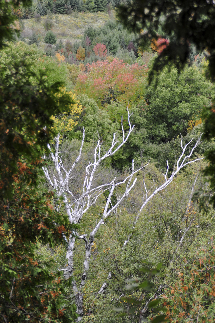 Why you should take photos in the morning light - examples from a hike at Mount Nemo Conservation Area.