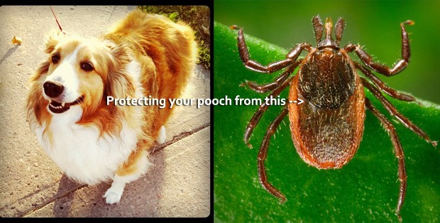 protecting your dog from ticks