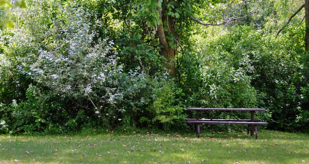 Tips for a romatic picnic